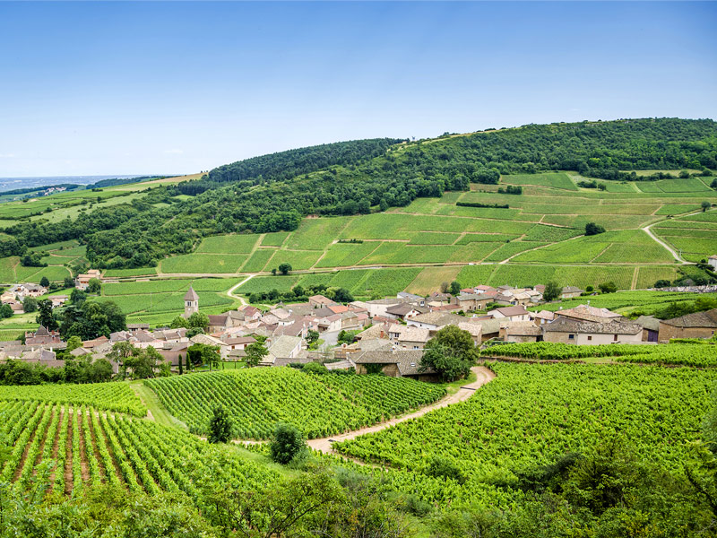 France's wine country