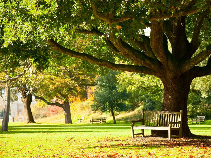 Secret Garden: Royal Botanic Gardens At Kew