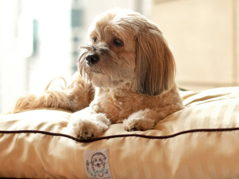 Dog Friendly Spa Resorts New England