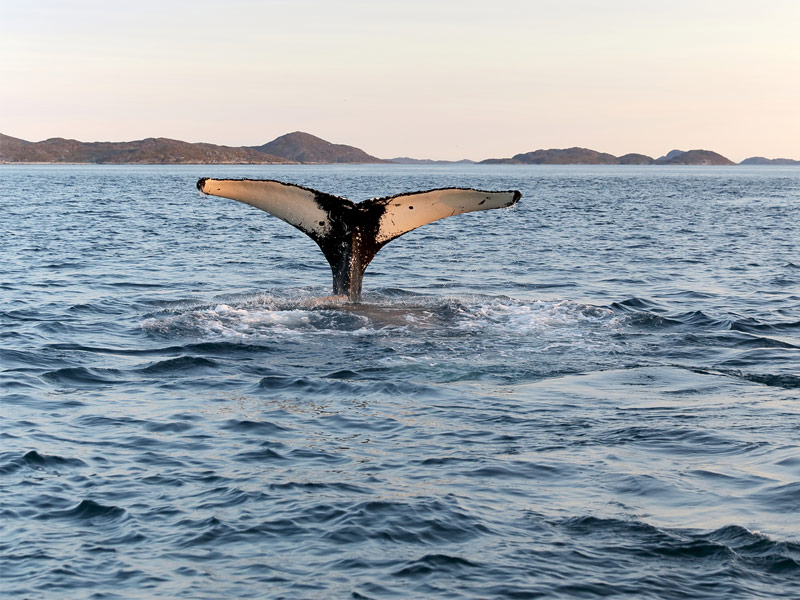 Take a Whale-Watching Cruise