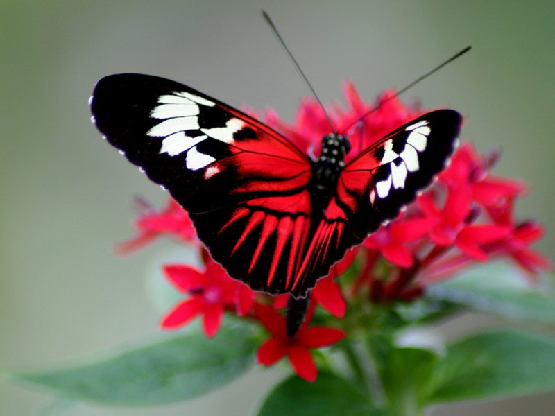 Butterfly World, Coral Springs