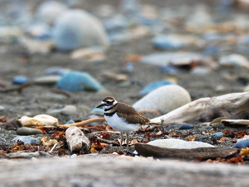 Dungeness National Wildlife Refuge, Dungeness