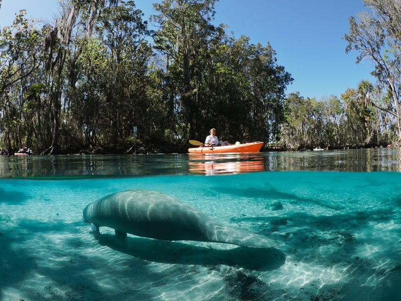 Three Sisters Springs - Crystal River
