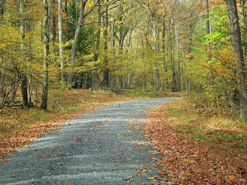 Bald Eagle State Forest, Pennsylvania