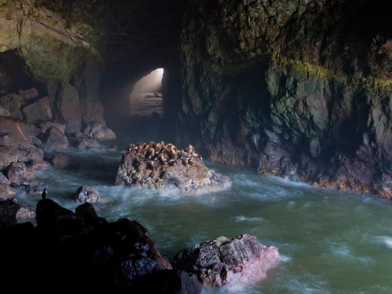 Sea Lion Caves, Florence