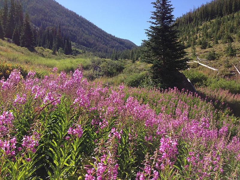 Jarbidge Wilderness, Nevada