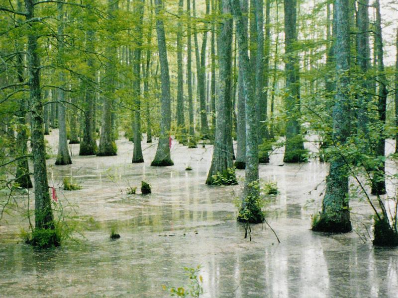Natchez Trace Cypress Swamp