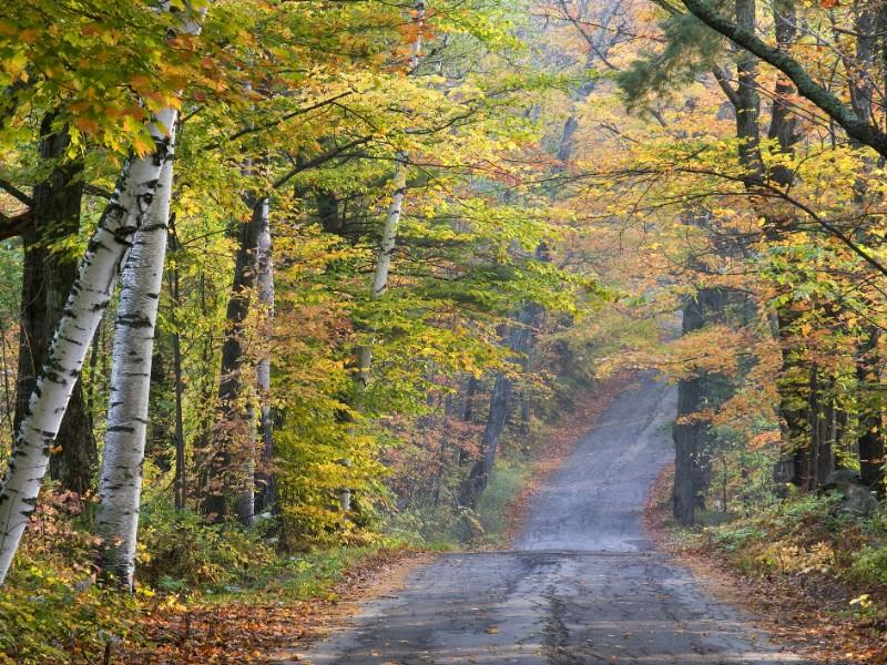Autumn scenery along road in Sugar Hill.