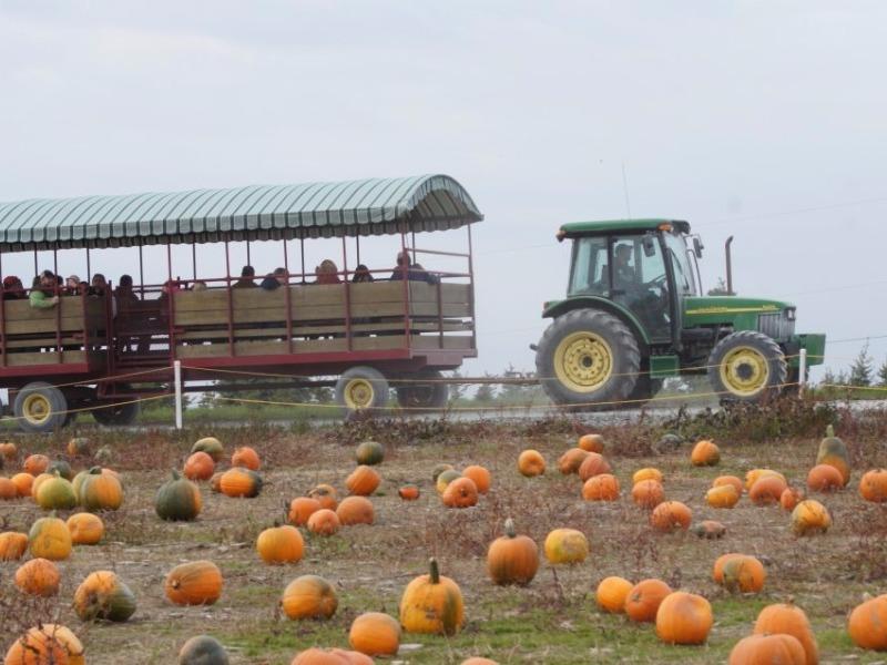 Roba Family Farm