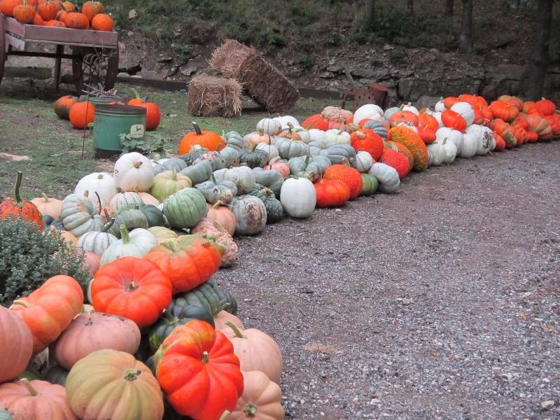 Walter's Pumpkin Patch