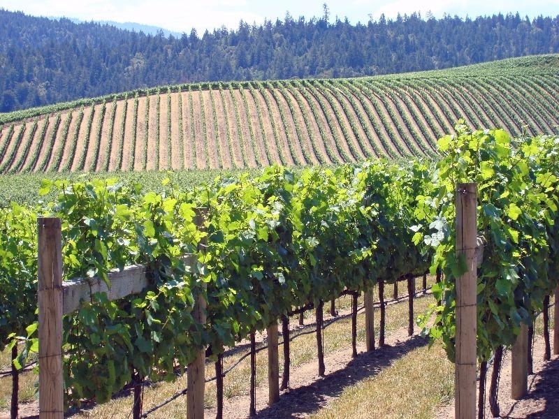 Anderson Valley vineyard, Mendocino Wine Country