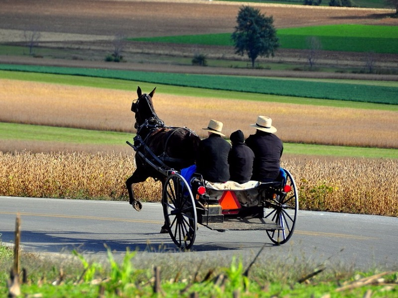 Amish horse and open carriage
