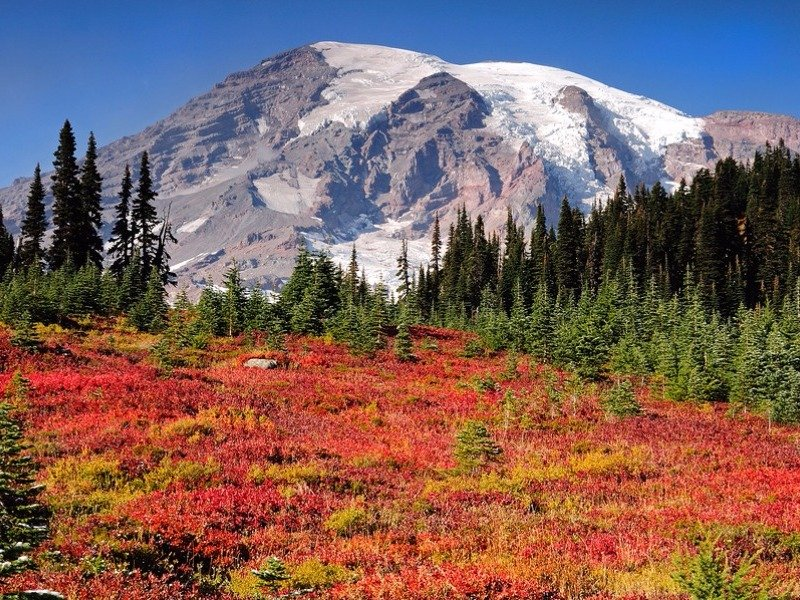 Paradise meadows at Mount Rainier