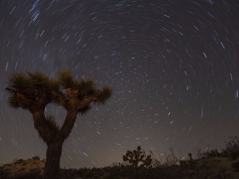 Joshua Tree and star trails, Mohave Desert, California