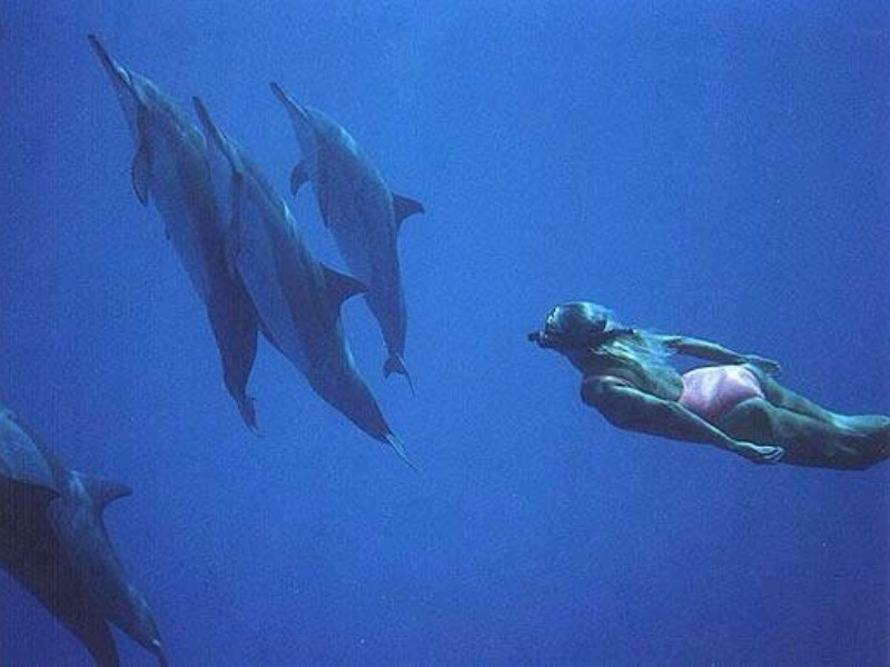 swimming with Spinner dolphins near Kona, Hawaii