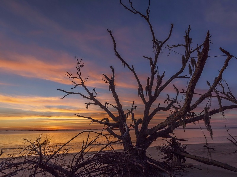 Driftwood and tree branches at Jekyll Island