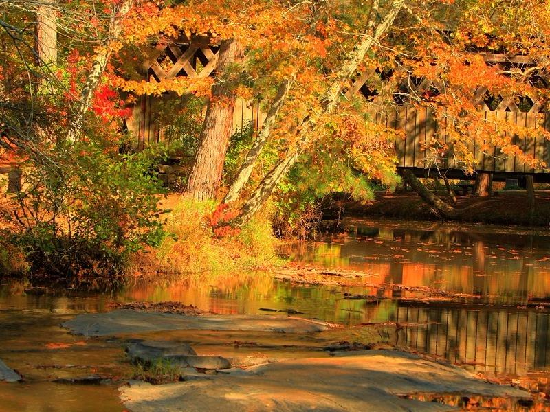 Fall colors at Pools Mill Park in Cumming