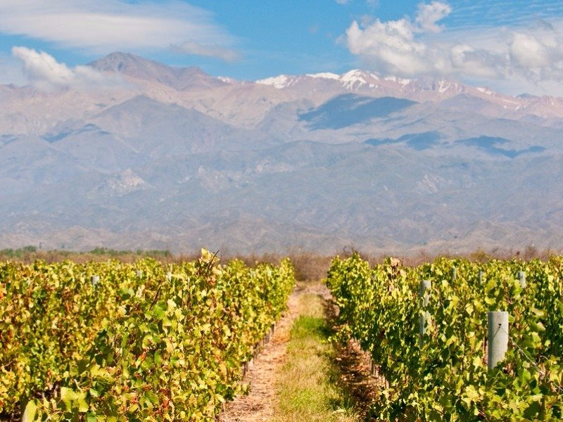 Vineyards of Mendoza and Andes mountains