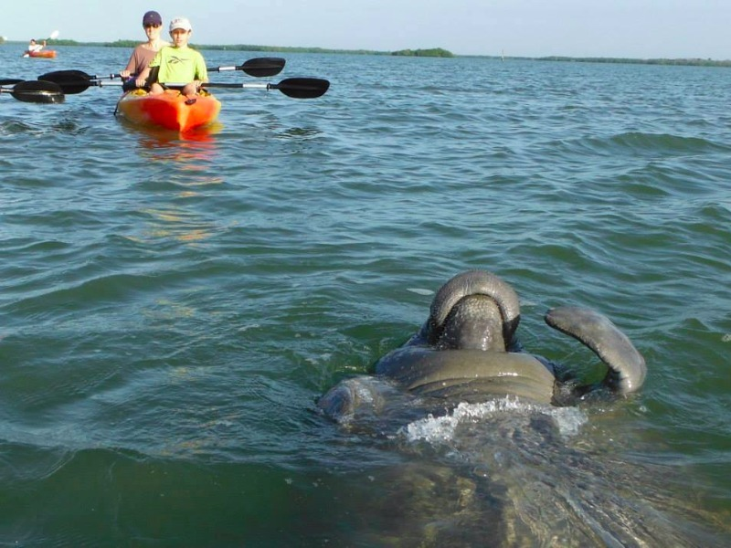 Lee County Manatee Park, Fort Myers