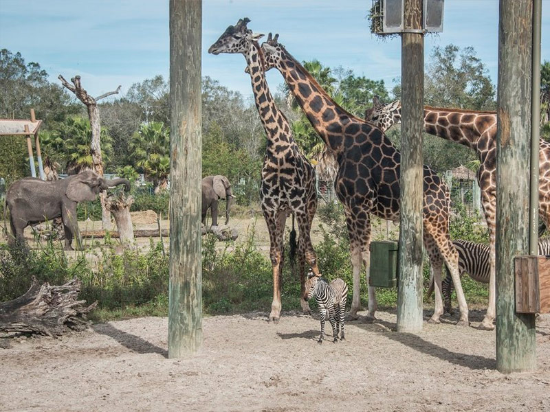 Lowry Park Zoo, Tampa