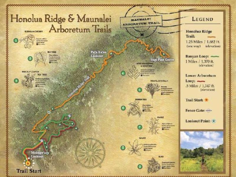 Map of Kapalua Maunalei Arboretum