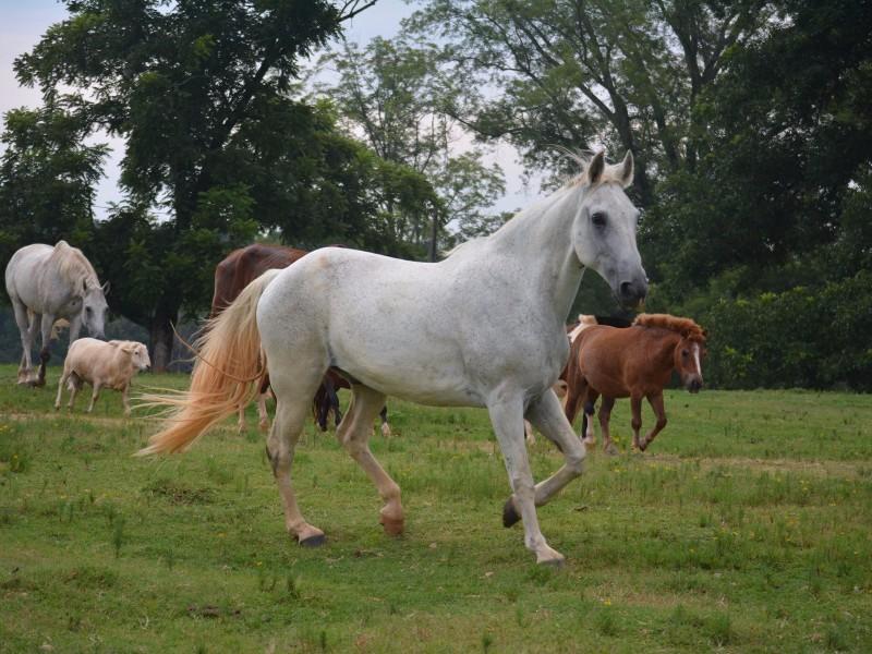 Horses at Noah's Ark