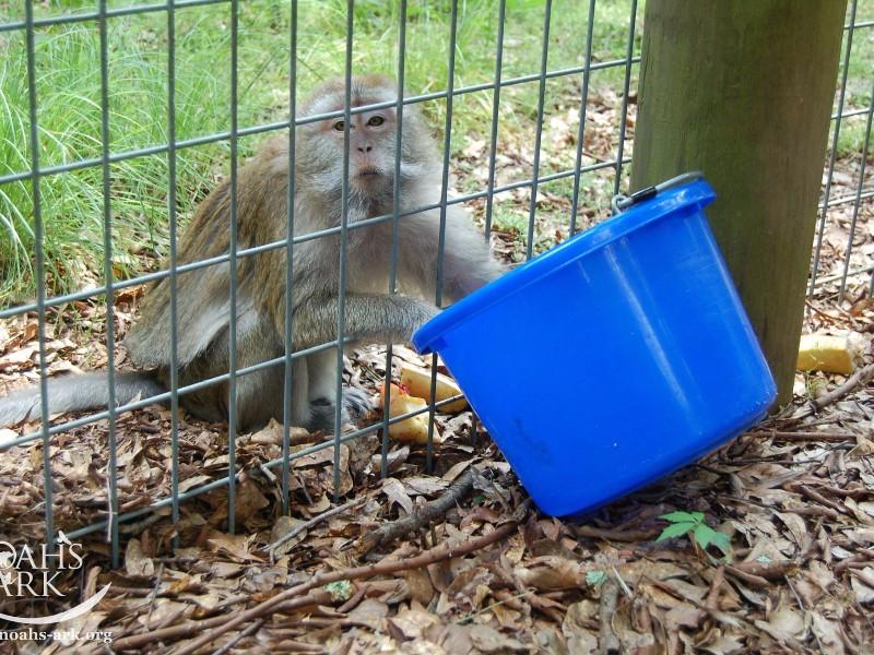 Monkey at Noah's Ark