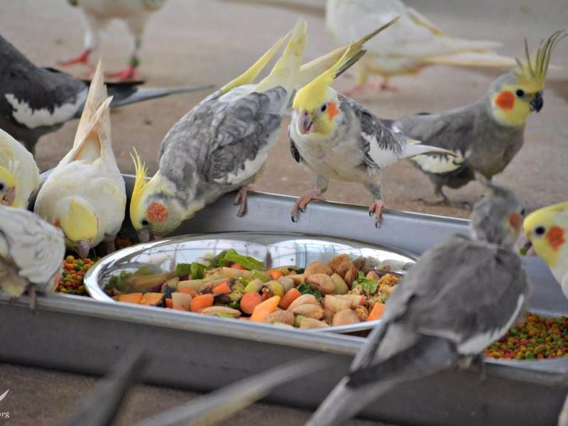 Wild parrots at Noah's Ark