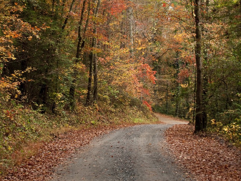 Gravel road with Fall colors in Elljay
