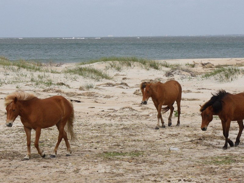 Shackleford Beach