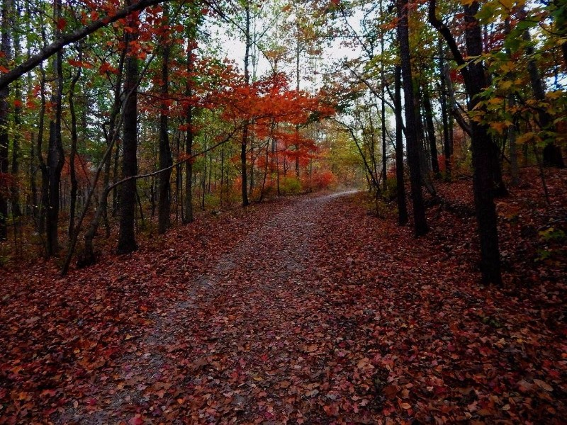 Fall hiking in James H. Floyd State Park