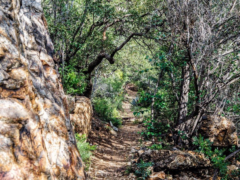 Trail to Cattail Falls