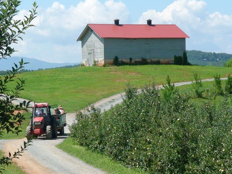 A day out on the farm at Mercier Orchards