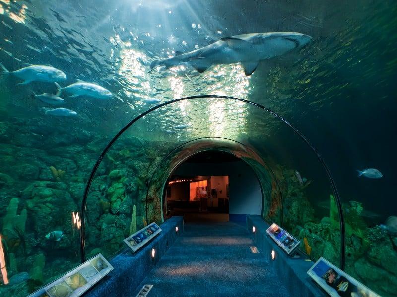 Moody Gardens Aquarium Pyramid by Katie Haugland Bowen - How Much Does Moody Gardens Cost