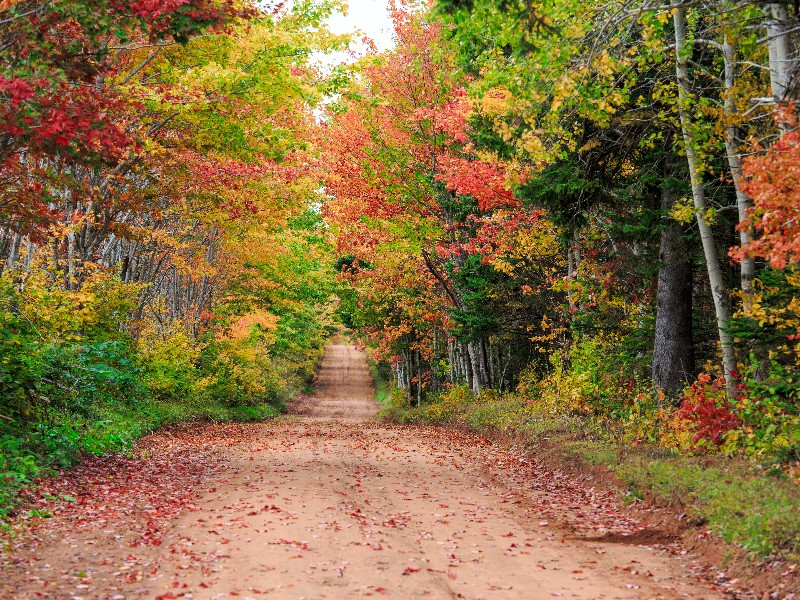 Prince Edward Island in the fall