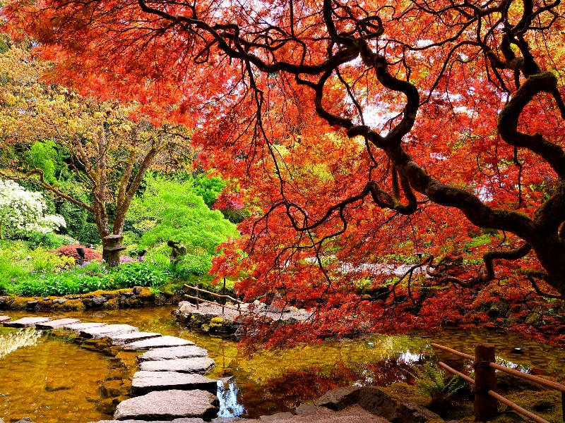 Butchart Gardens, Victoria, B.C. in the fall