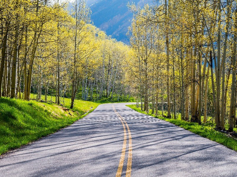 Road through the Aspens in the fall