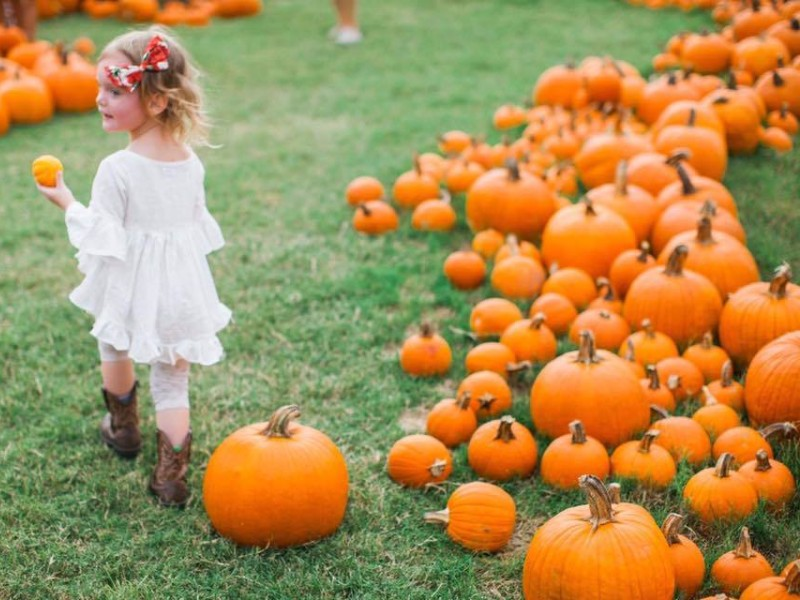 Pumpkin patch at Barton Hill Farms