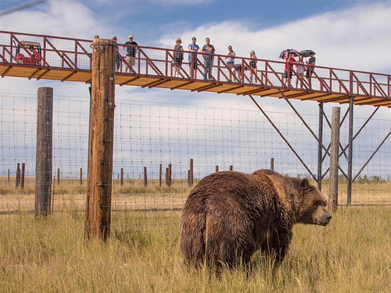 1.5 mile long elevated walkway at The Wild Animal Sanctuary
