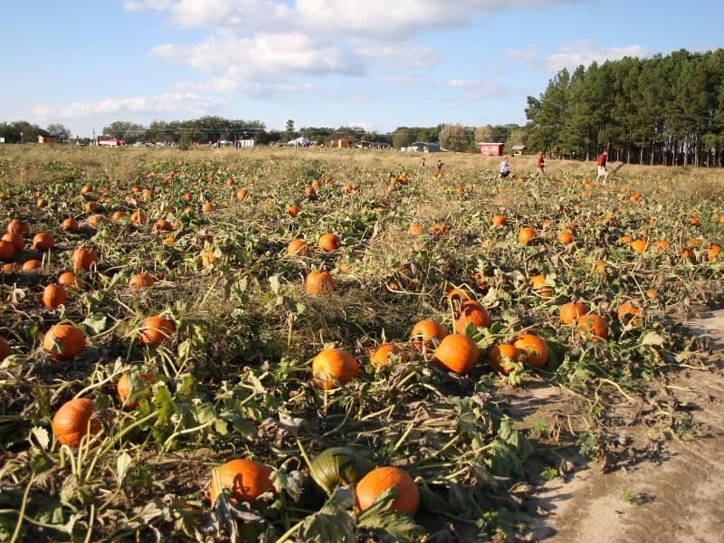 Washington Farms, Watkinsville