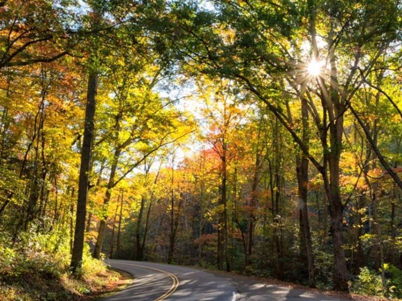 There are 384 miles of roads to explore in the park.
