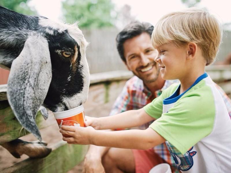 Animal feedings at Gulf Breeze Zoo
