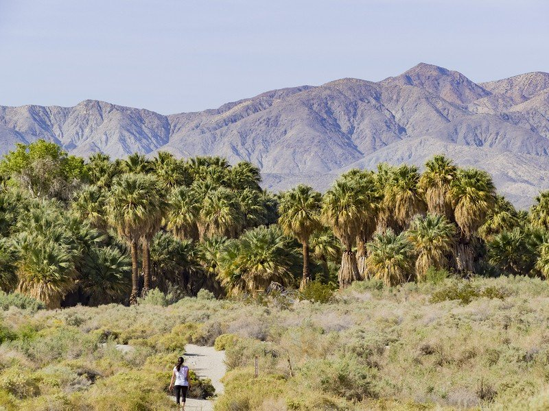 Awesome hiking at Coachella Valley Preserve