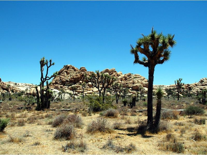 Epic scenery at Joshua Tree National Park