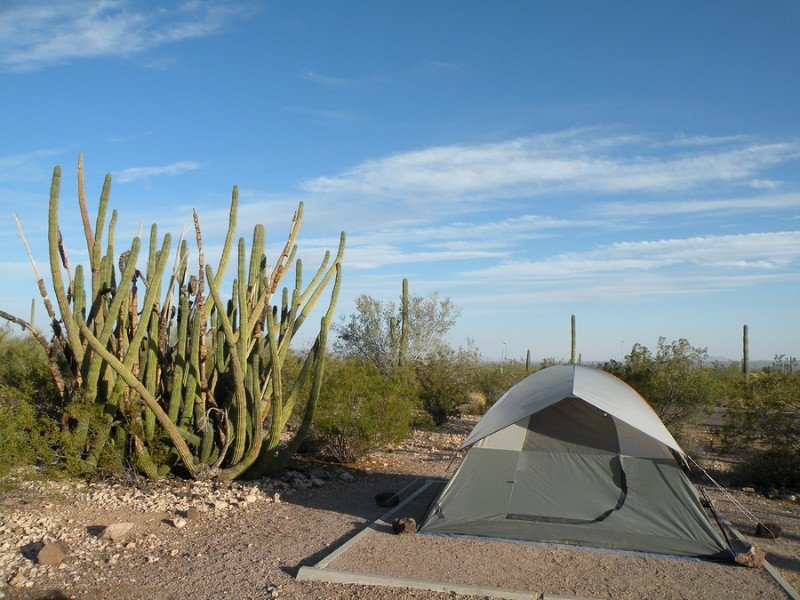 Tent camping in Organ Pipe National Monument in Arizona