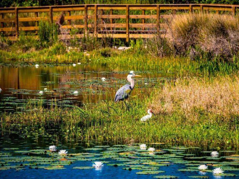 Birdwatching in Perico Preserve