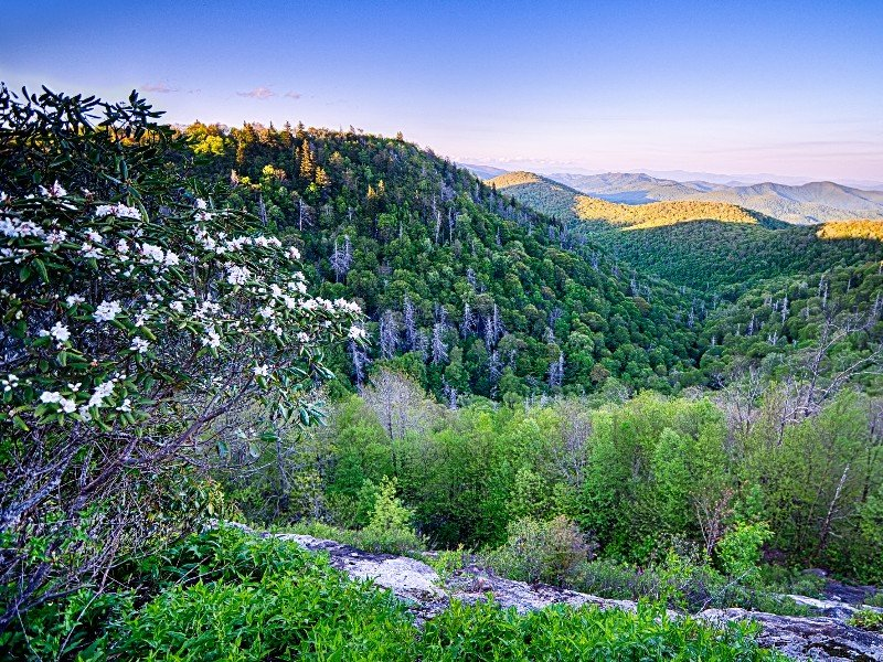 Springtime in the Smoky Mountains