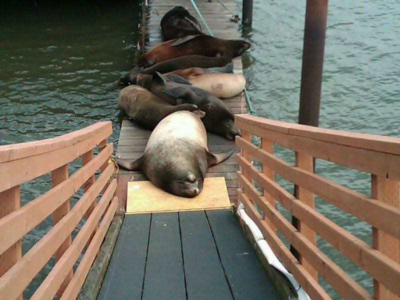 'Goonies' docks, sea lions, Astoria, Oregon