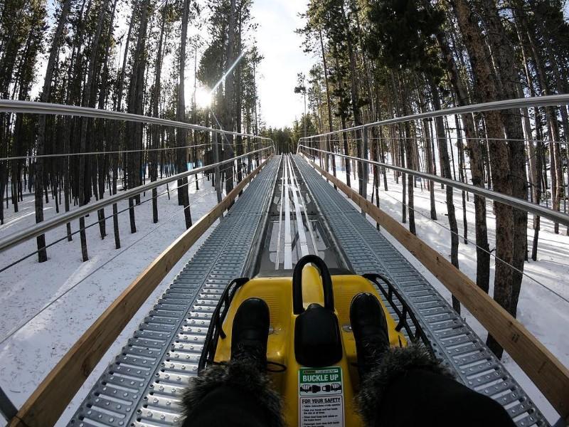 Gold Runner Alpine Coaster