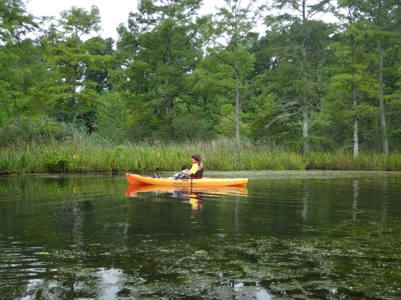 Tour the Back Bay Wildlife Refuge by kayak with Adventure Kayak Tours.